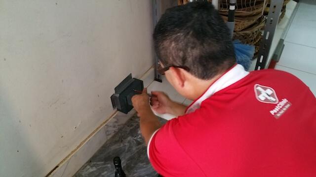 Pest Control Companies In Singapore, Termite Control