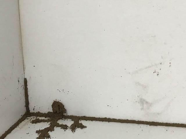 Pest Control Companies, Termite Control Companies