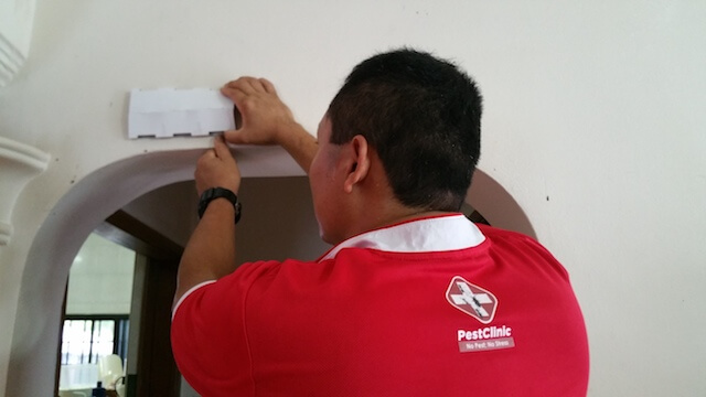 Pest Control Companies, Singapore Termite Removal