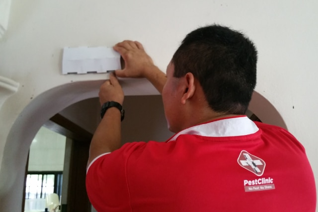 Pest Control, Pest Control Services