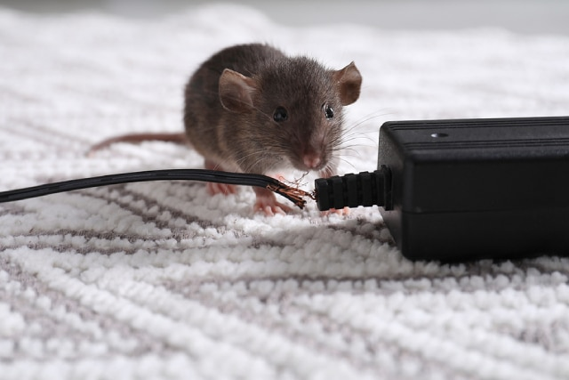 3 Surprising Health Risks Of Having Pests In Your Home