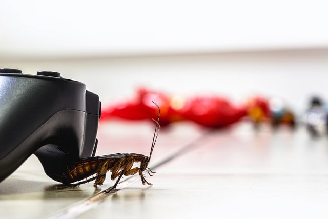 Pest Control Companies In Singapore